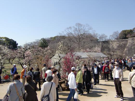 大阪城公園梅林20132-20