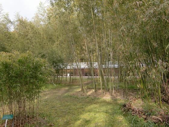 京都府立植物園の桜2014-10