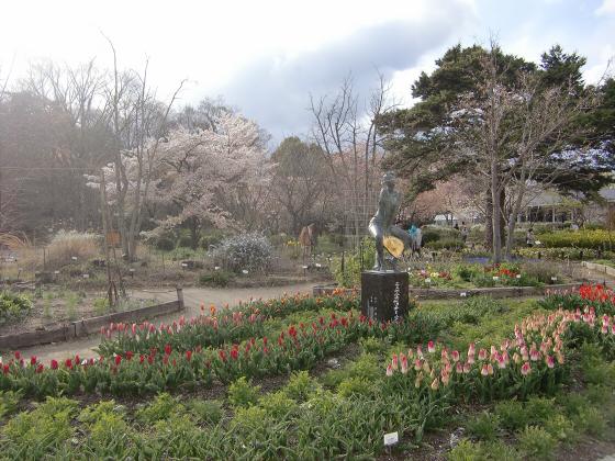 京都府立植物園の桜2014-12