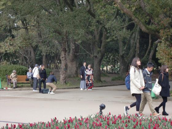 京都府立植物園の桜2014-26