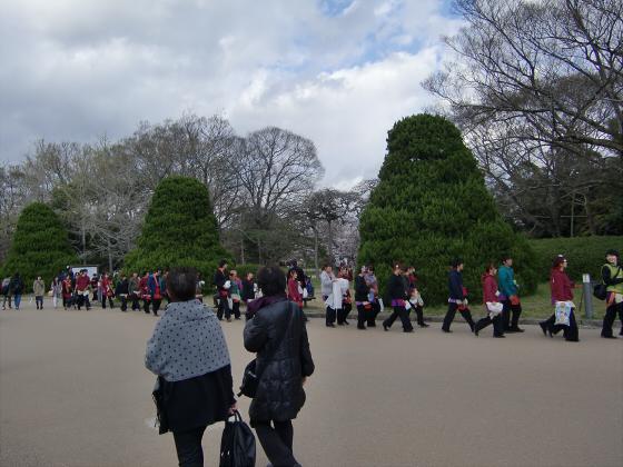京都府立植物園の桜2014-28