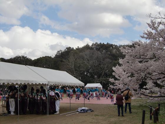 京都府立植物園の桜2014-30