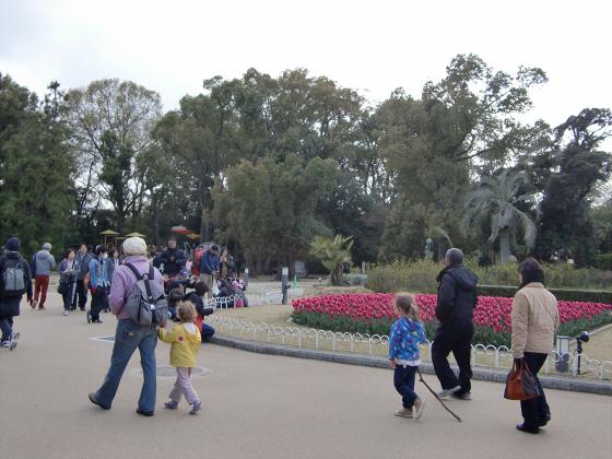 京都府立植物園の桜2014-32