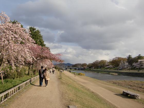 半木の道近辺の桜16