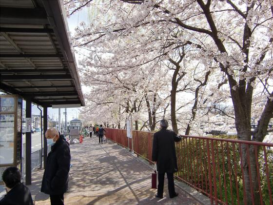 賀茂川の桜2014-04