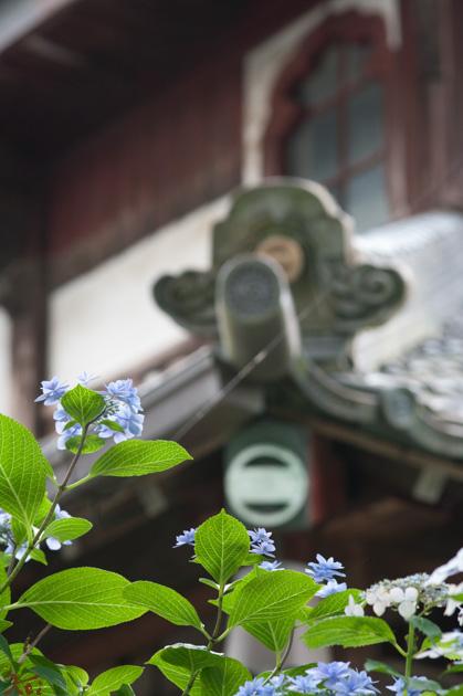 20140621アジサイ_さざえ堂06