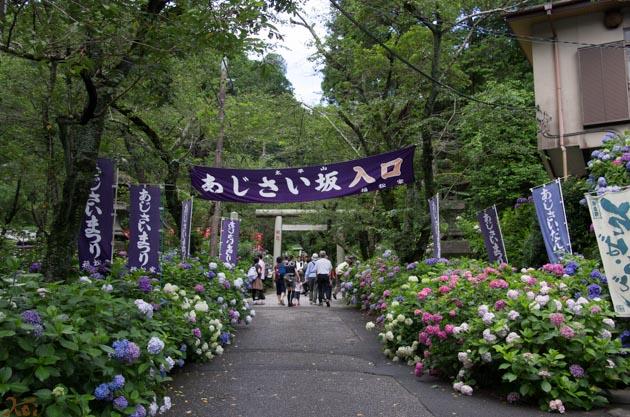 20140629紫陽花_太平山01
