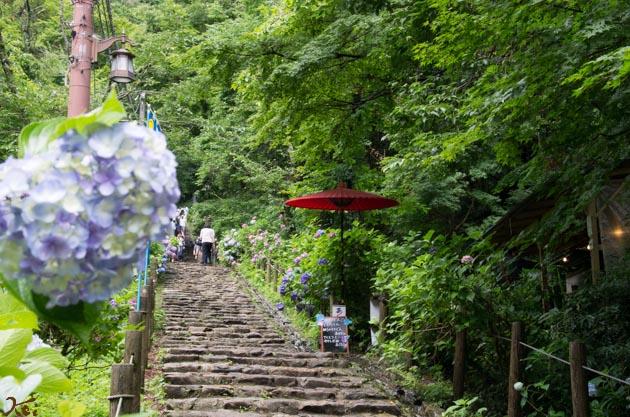 20140629紫陽花_太平山04