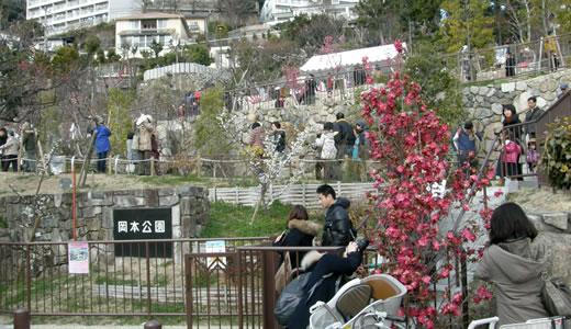 摂津岡本梅まつり2014-1