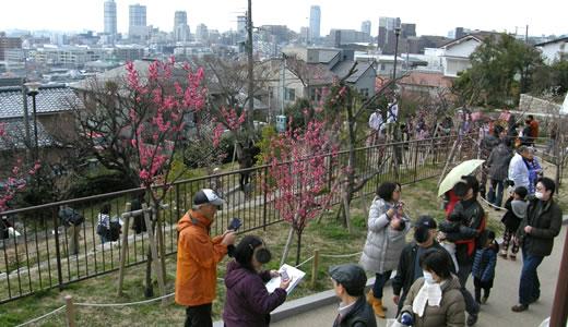 摂津岡本梅まつり2014-2