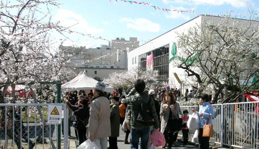 第25回アーモンドフェスティバル&第10回日本橋ストリートフェスタ-1