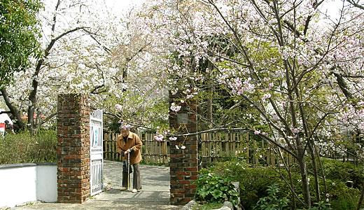 岡本南公園観桜会2014-1