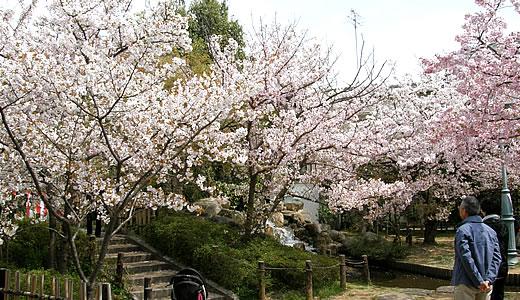 岡本南公園観桜会2014-3