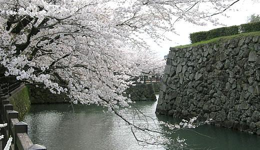 姫路城観桜会(3)-2