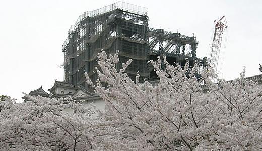 姫路城観桜会(3)-3