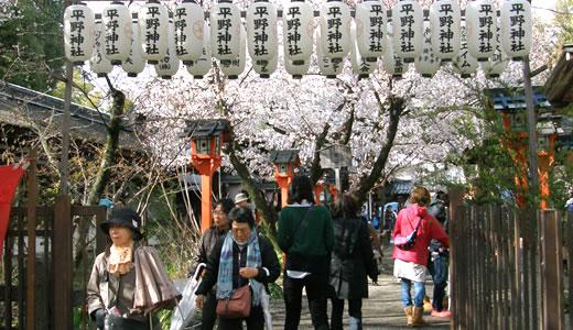 嵐電沿線の桜2014@京都(3)-2