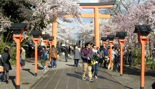 嵐電沿線の桜2014@京都(3)-3