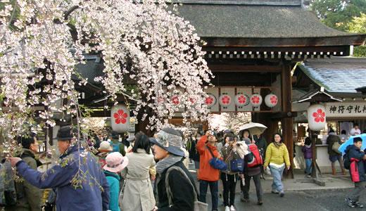 嵐電沿線の桜2014@京都(3)-4