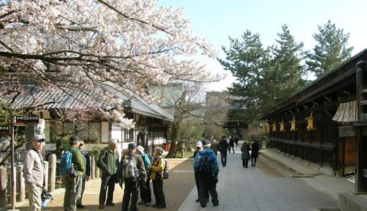 嵐電沿線の桜2014@京都(4)-3