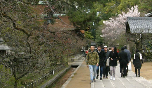 嵐電沿線の桜2014@京都(4)-5