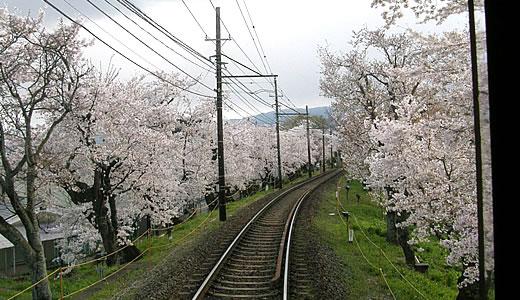 嵐電沿線の桜2014@京都(2)-5