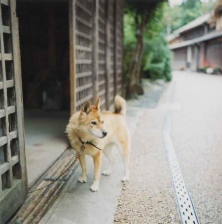 TOY-499_Yashica.jpg