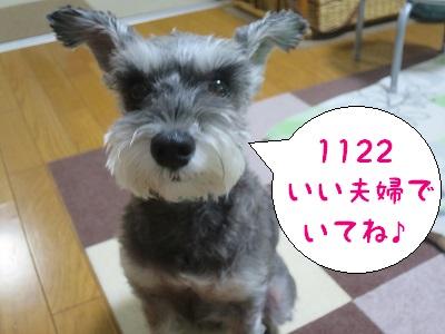 IMG_6406[1]