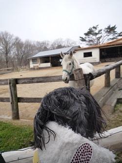 お馬さん、こんにちは