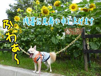 yuruiro20140801_i001
