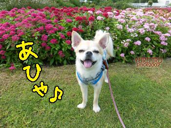 yuruiro20140920_i001