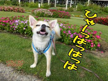yuruiro20140920_i002