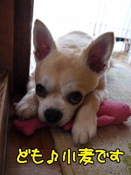 yuruiro20140729_001
