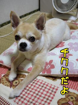 yuruiro20140729_002