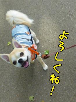 yuruiro20140729_003