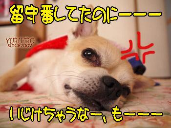 yuruiro20140803_i009