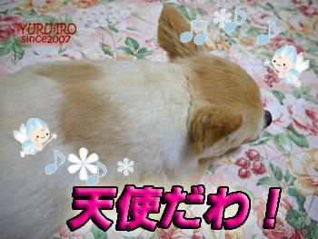 yuruiro20140812_i003