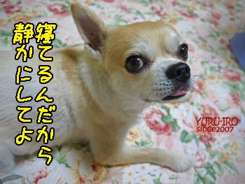 yuruiro20140812_i004