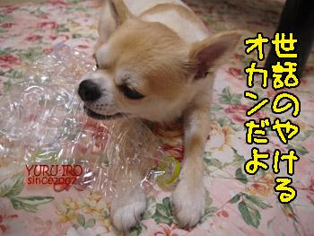 yuruiro20140903_i002
