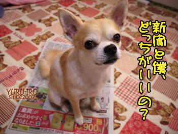 yuruiro20140909_i003