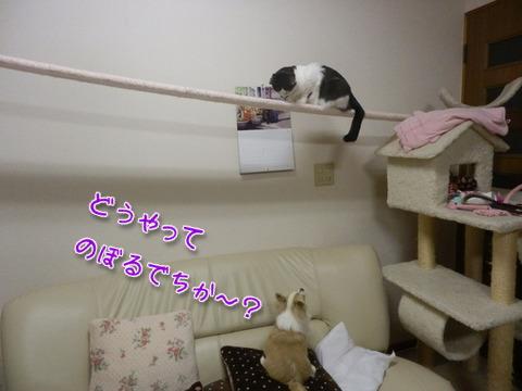 のぼるでち~!5