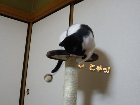 キャットタワーでルンルン~♪2