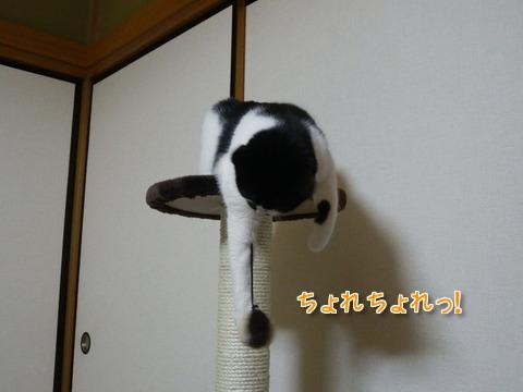 キャットタワーでルンルン~♪3