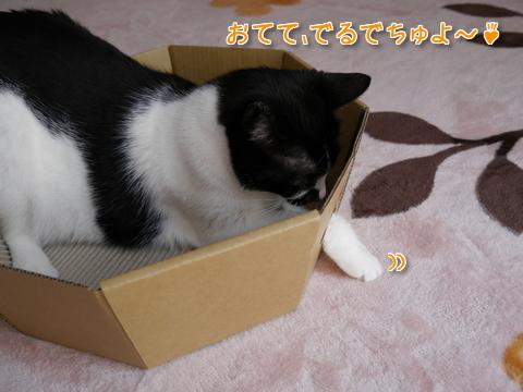 にゃんこなべ part1~♪4