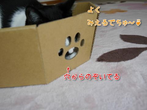 にゃんこなべ part1~♪6