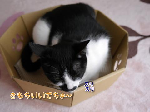 にゃんこなべ part1~♪7