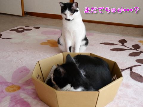 にゃんこなべ part1~♪9