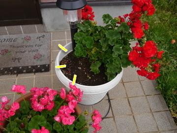 お花が~♪2