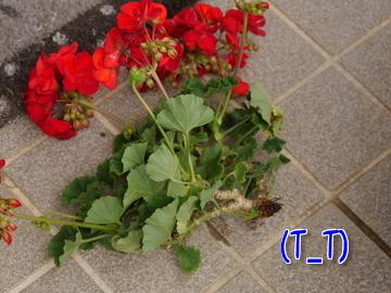 お花が~♪4