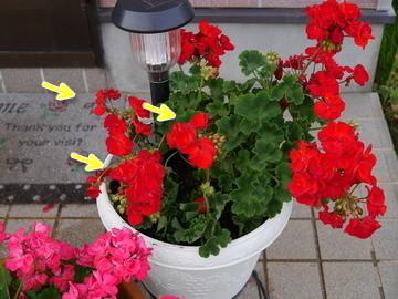 お花だよ~♪10