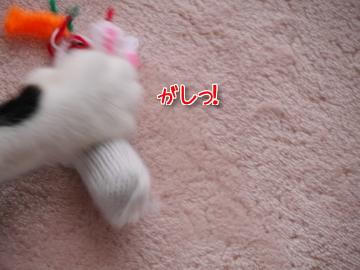 はっちゃけうたこ~♪5